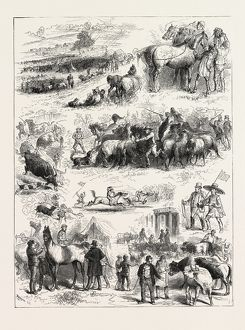 BIPEDS AND QUADRUPEDS AT BARNET FAIR, UK, 1873 engraving
