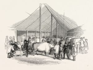 Cattle Show, London, England, engraving 19th century, Britain, UK