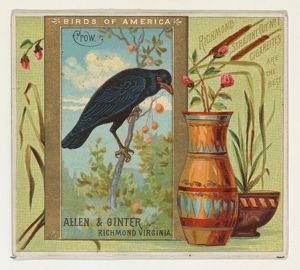Crow, from the Birds of America series (N37) for Allen & Ginter Cigarettes, 1888