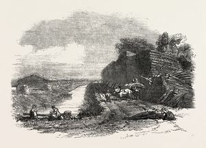 WHITTLESEA MERE, STACKING REED, BY THE HOLME LODGE, UK, 1851 engraving
